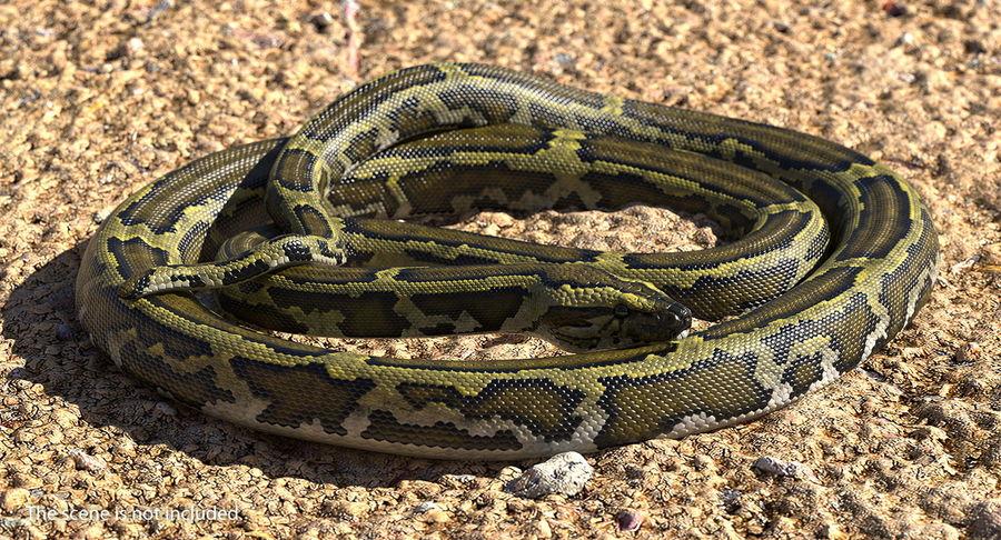 Pose enroulée de serpent vert python royalty-free 3d model - Preview no. 3