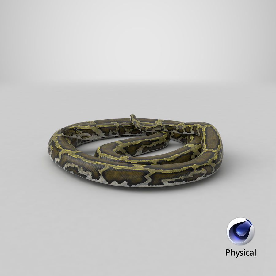 Pose enroulée de serpent vert python royalty-free 3d model - Preview no. 24