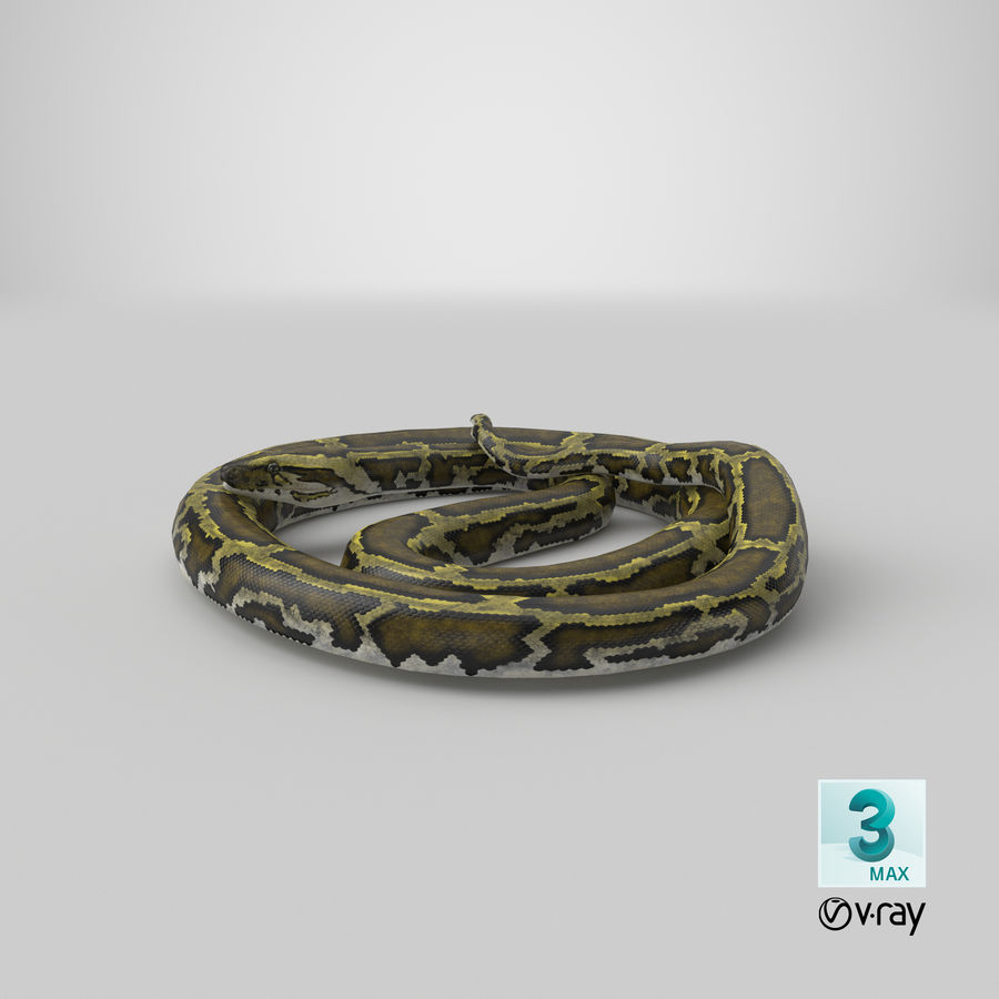 Pose enroulée de serpent vert python royalty-free 3d model - Preview no. 30
