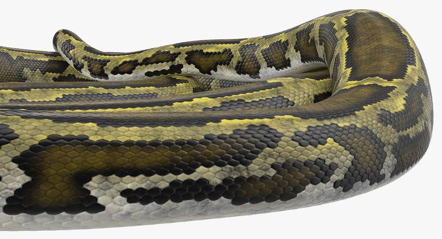 Pose enroulée de serpent vert python royalty-free 3d model - Preview no. 13