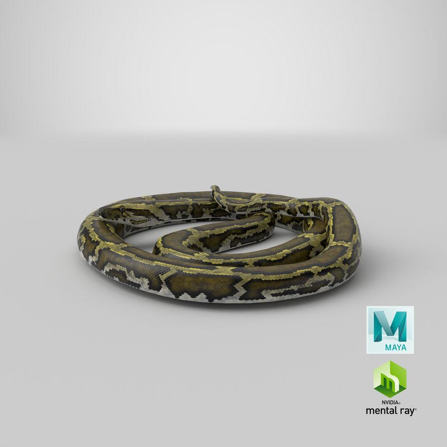 Pose enroulée de serpent vert python royalty-free 3d model - Preview no. 32