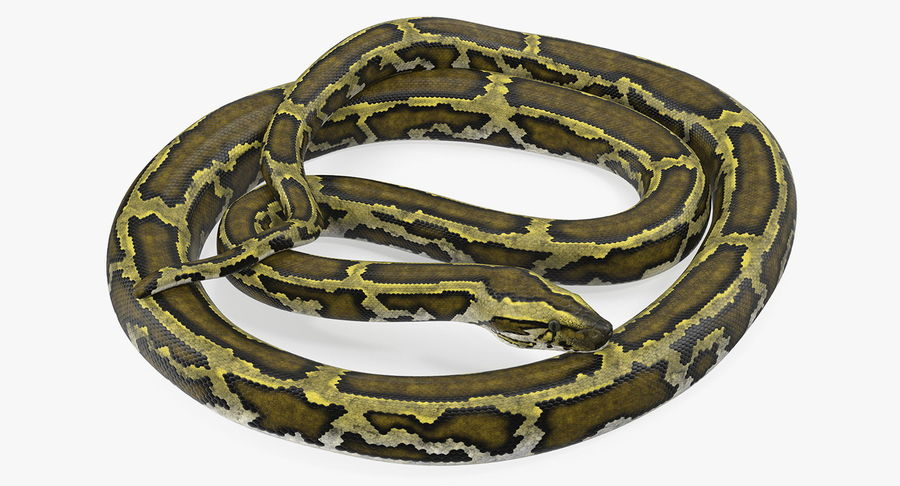 Pose enroulée de serpent vert python royalty-free 3d model - Preview no. 5