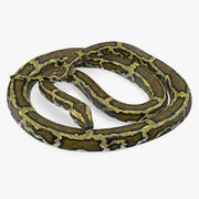 Pose enroulée de serpent vert python 3d model