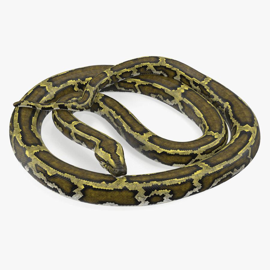 Pose enroulée de serpent vert python royalty-free 3d model - Preview no. 1