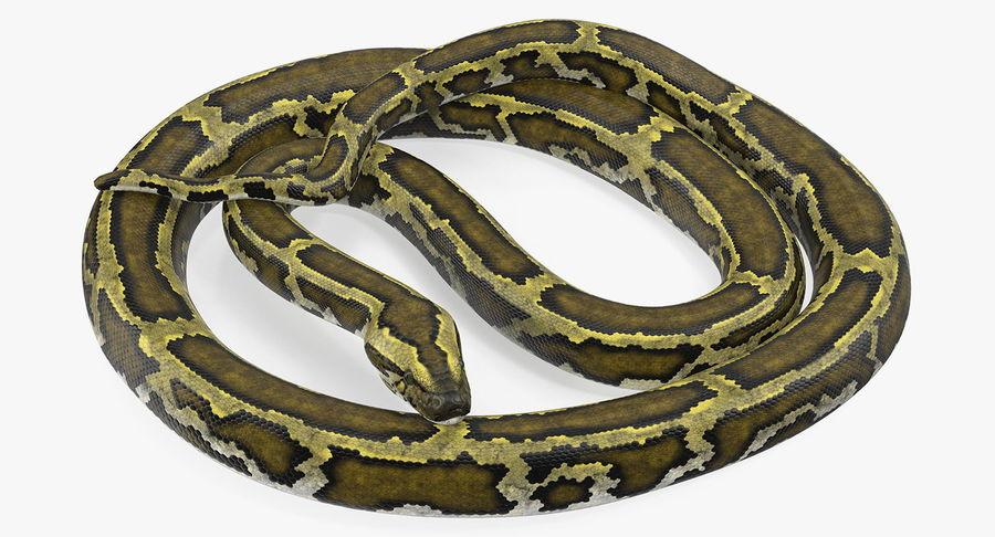Pose enroulée de serpent vert python royalty-free 3d model - Preview no. 2