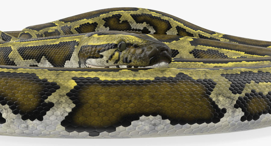 Pose enroulée de serpent vert python royalty-free 3d model - Preview no. 8