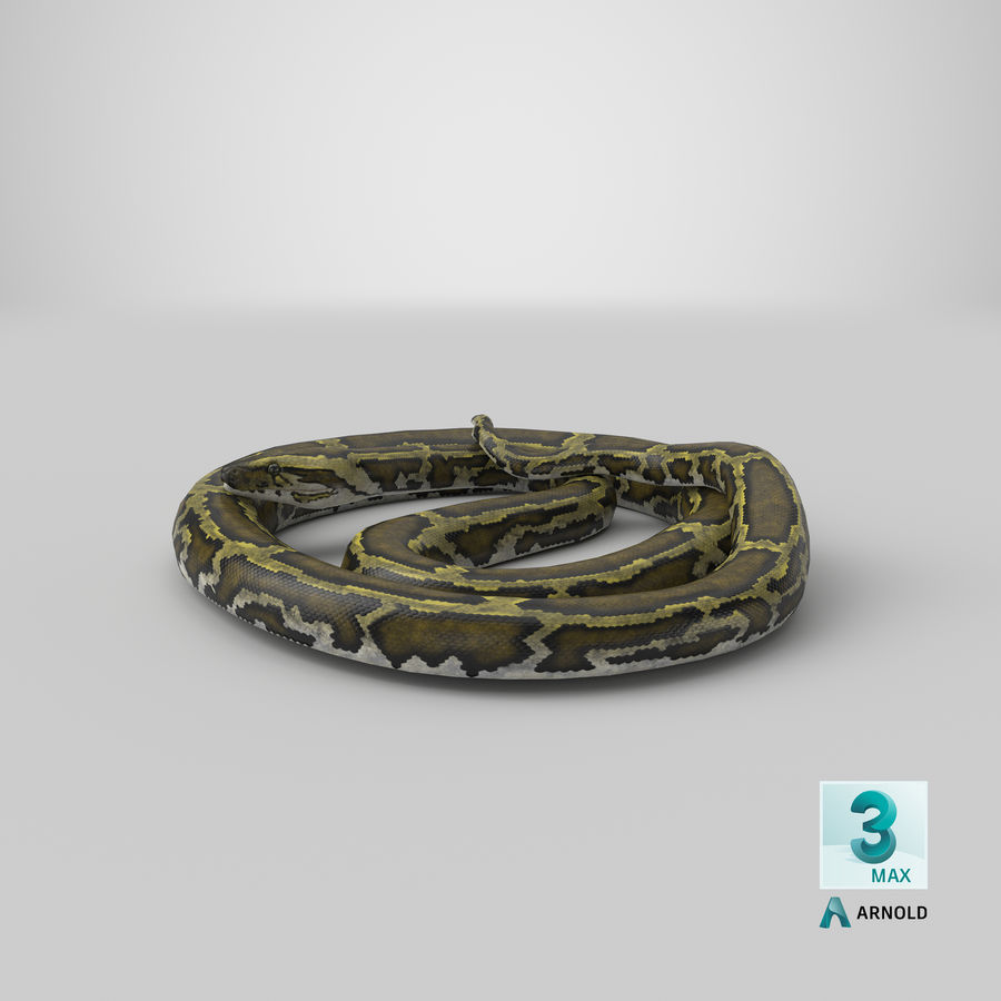 Pose enroulée de serpent vert python royalty-free 3d model - Preview no. 28