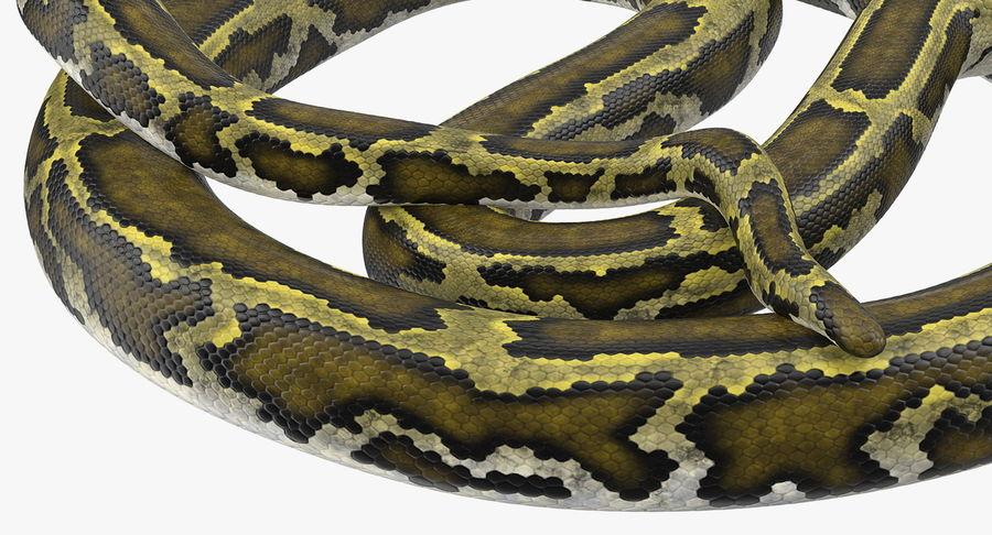 Pose enroulée de serpent vert python royalty-free 3d model - Preview no. 11