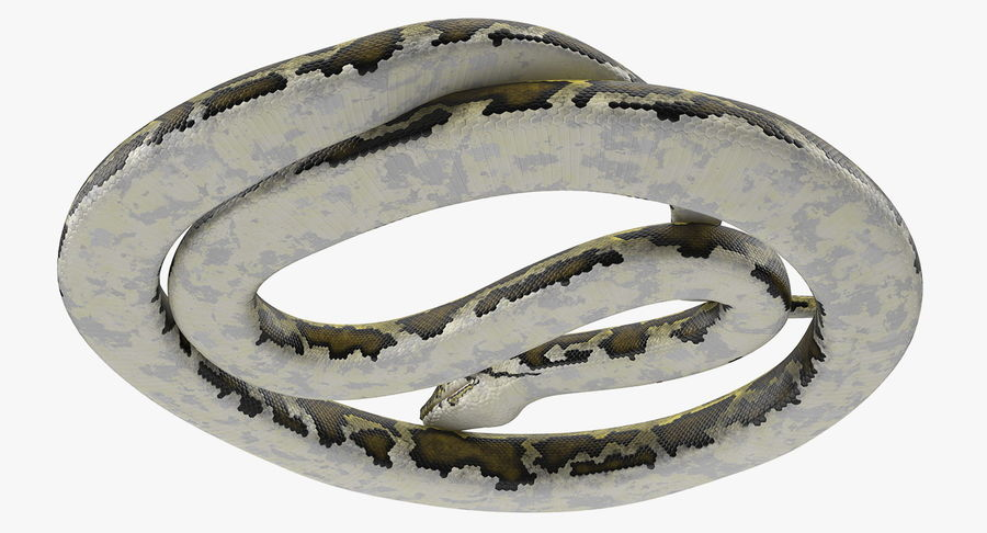 Pose enroulée de serpent vert python royalty-free 3d model - Preview no. 10