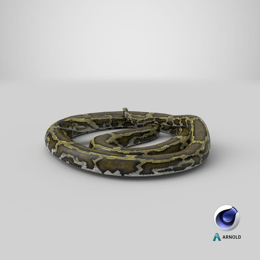 Pose enroulée de serpent vert python royalty-free 3d model - Preview no. 25