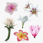 Flowers Collection 9 3d model