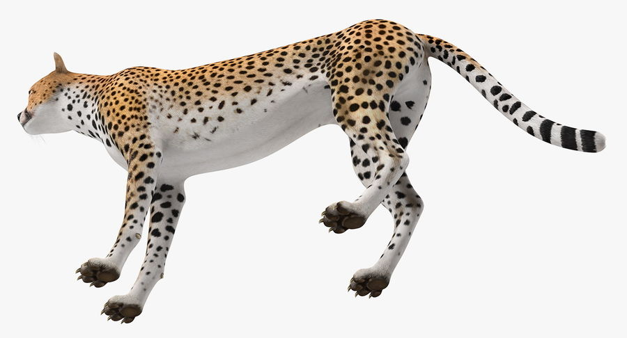 African Animals 3D Models Collection 3 royalty-free 3d model - Preview no. 8