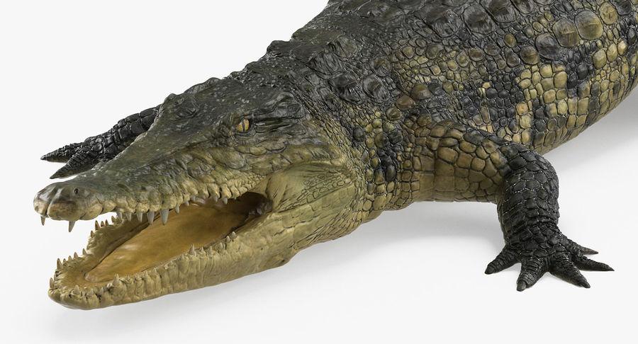 アフリカの動物3Dモデルコレクション3 royalty-free 3d model - Preview no. 33