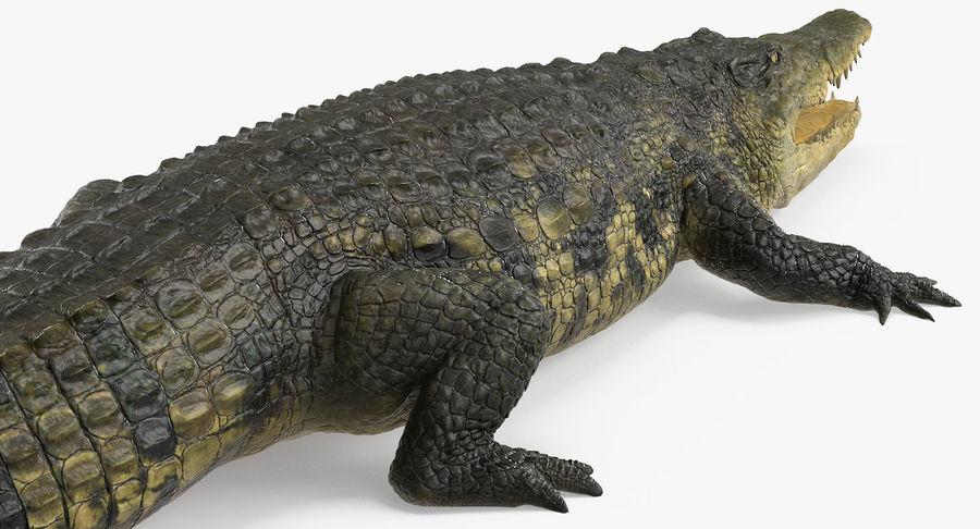 アフリカの動物3Dモデルコレクション3 royalty-free 3d model - Preview no. 32