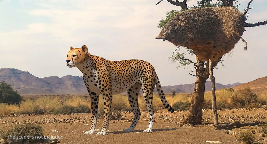 African Animals 3D Models Collection 3 royalty-free 3d model - Preview no. 4
