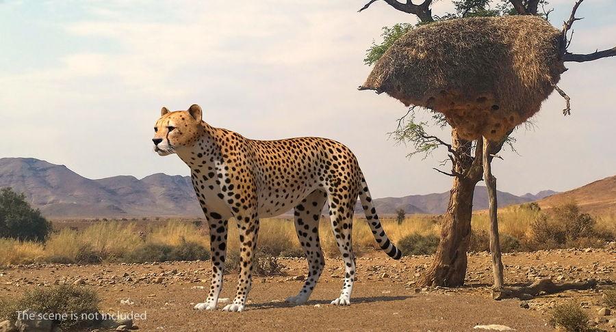 アフリカの動物3Dモデルコレクション3 royalty-free 3d model - Preview no. 4