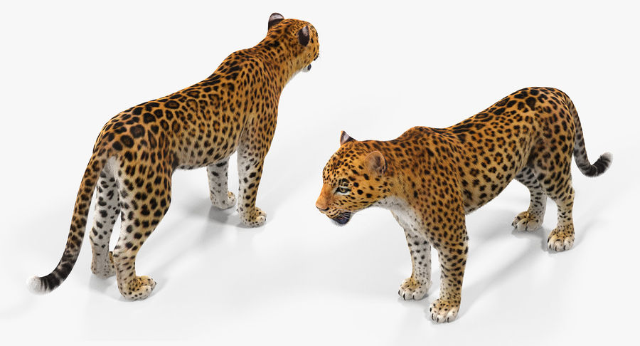African Animals 3D Models Collection 3 royalty-free 3d model - Preview no. 11