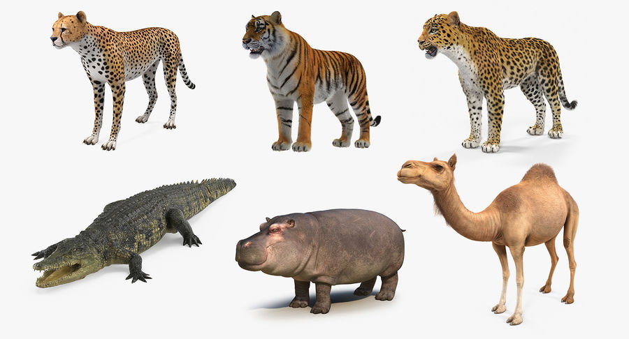 African Animals 3D Models Collection 3 royalty-free 3d model - Preview no. 2