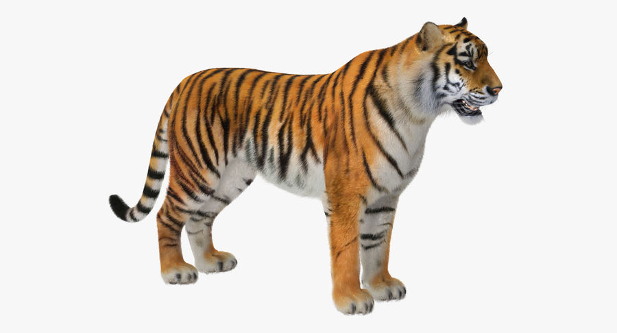 African Animals 3D Models Collection 3 royalty-free 3d model - Preview no. 18