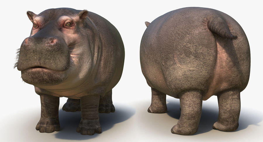 アフリカの動物3Dモデルコレクション3 royalty-free 3d model - Preview no. 37