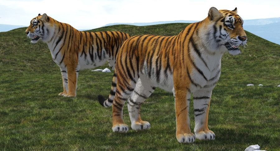 African Animals 3D Models Collection 3 royalty-free 3d model - Preview no. 17