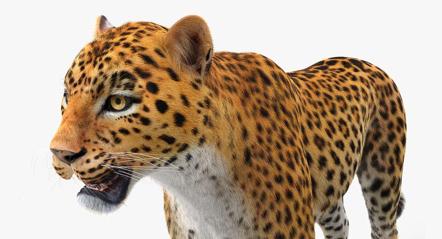 アフリカの動物3Dモデルコレクション3 royalty-free 3d model - Preview no. 13