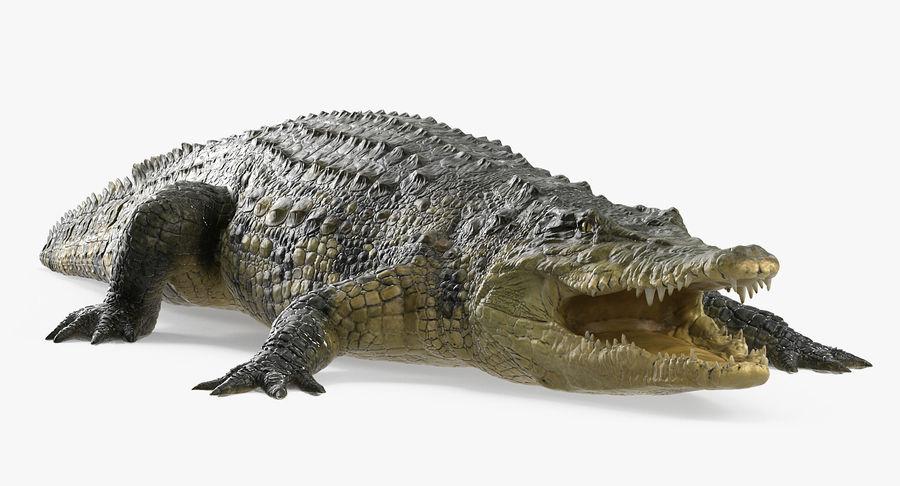 アフリカの動物3Dモデルコレクション3 royalty-free 3d model - Preview no. 31