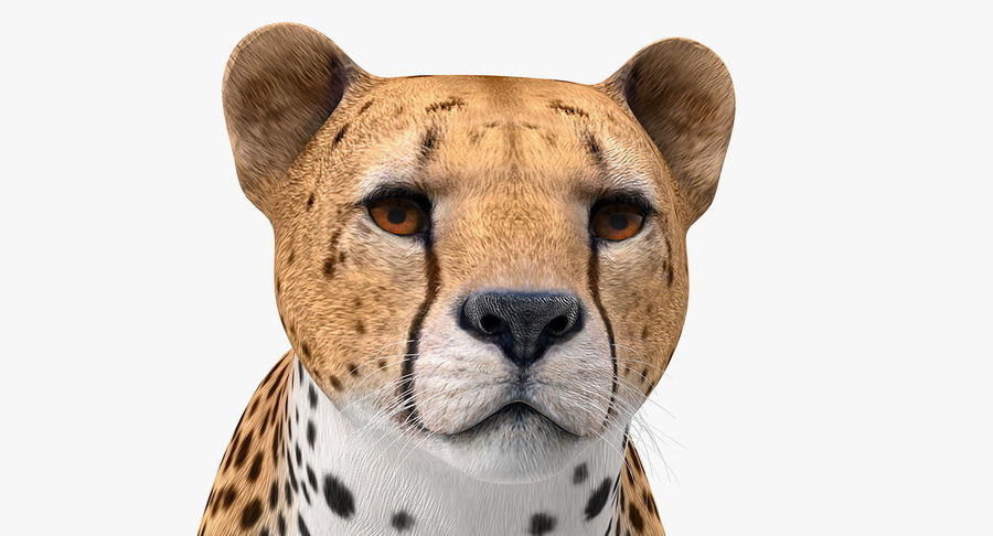 African Animals 3D Models Collection 3 royalty-free 3d model - Preview no. 7