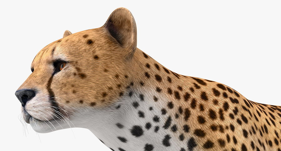 African Animals 3D Models Collection 3 royalty-free 3d model - Preview no. 6