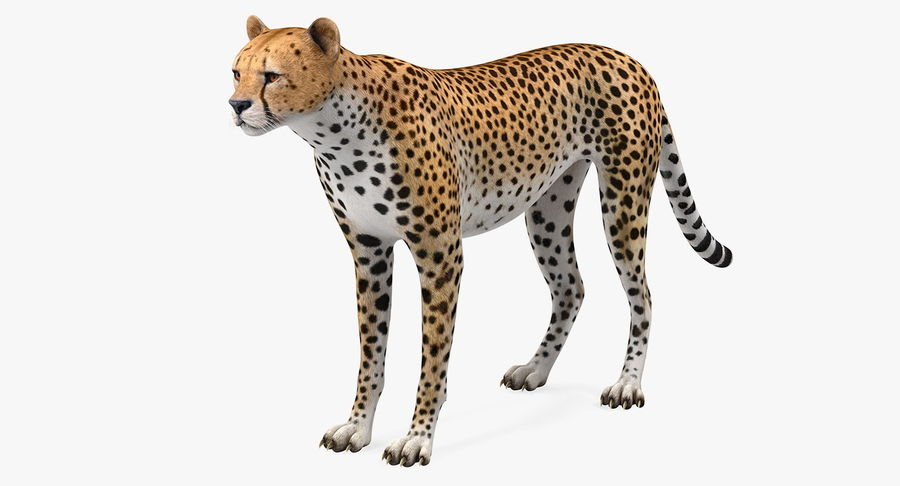 African Animals 3D Models Collection 3 royalty-free 3d model - Preview no. 3