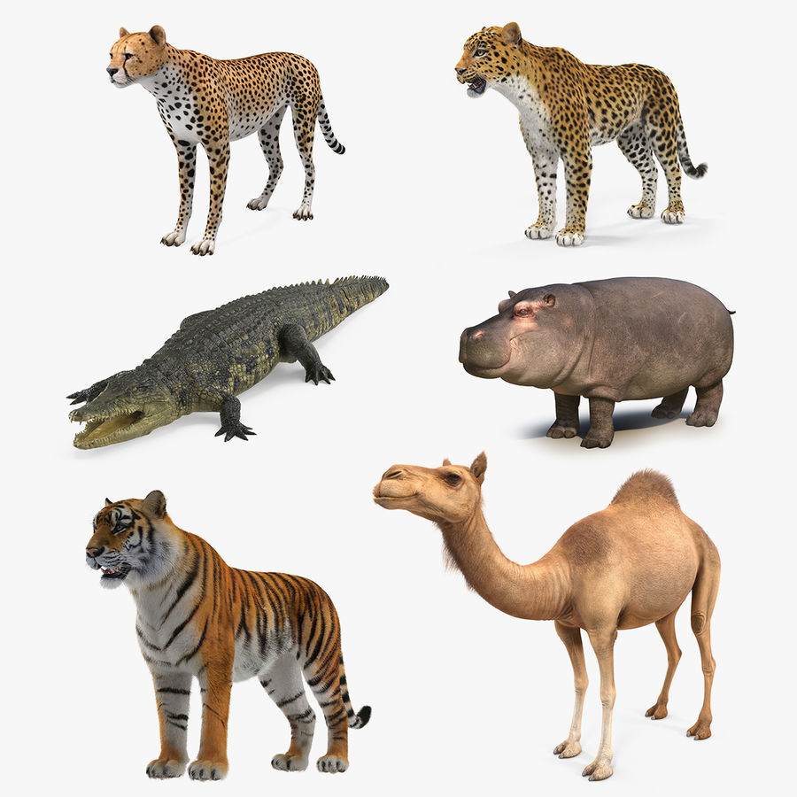 African Animals 3D Models Collection 3 royalty-free 3d model - Preview no. 1