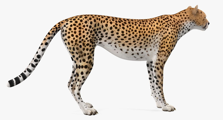 African Animals 3D Models Collection 3 royalty-free 3d model - Preview no. 5
