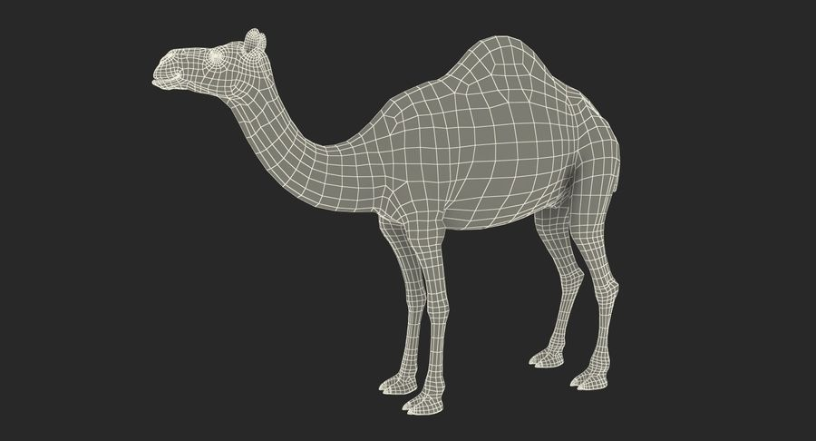 アフリカの動物3Dモデルコレクション3 royalty-free 3d model - Preview no. 43