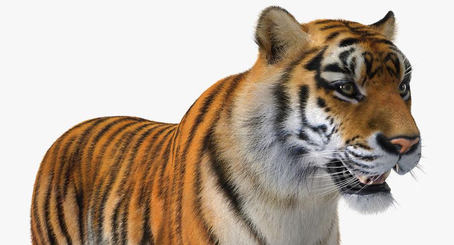 アフリカの動物3Dモデルコレクション3 royalty-free 3d model - Preview no. 21