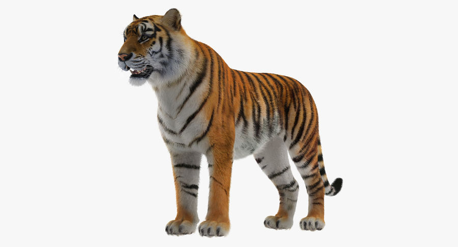 African Animals 3D Models Collection 4 royalty-free 3d model - Preview no. 27