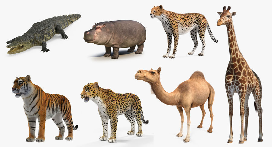 African Animals 3D Models Collection 4 royalty-free 3d model - Preview no. 2