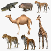 African Animals 3D Models Collection 4 3d model