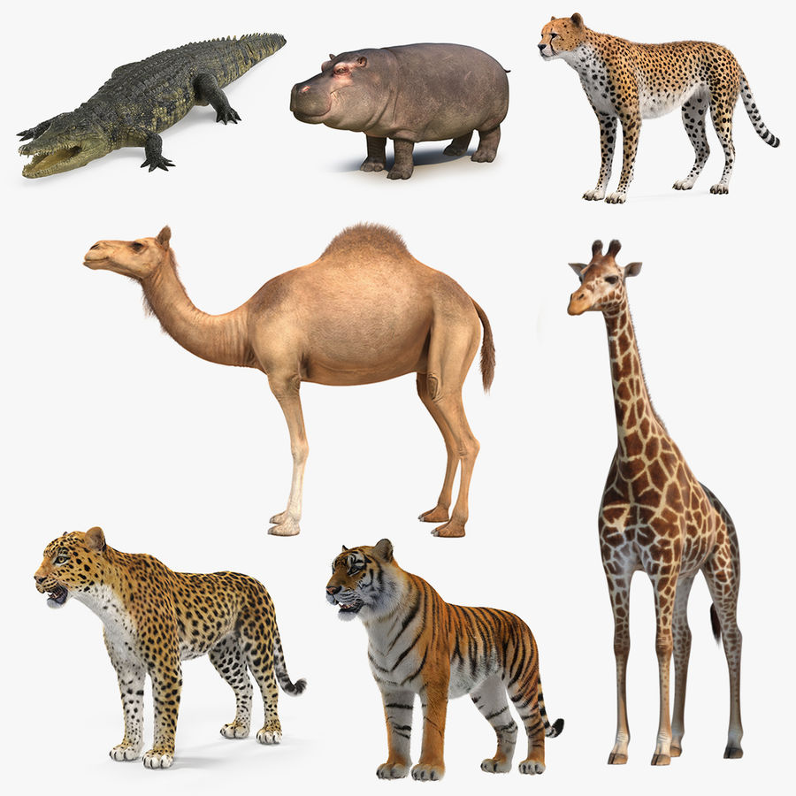 African Animals 3D Models Collection 4 royalty-free 3d model - Preview no. 1