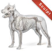 American pit bull terrier 3d model