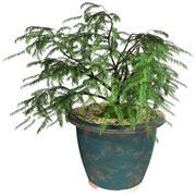 карликовое дерево 3d model