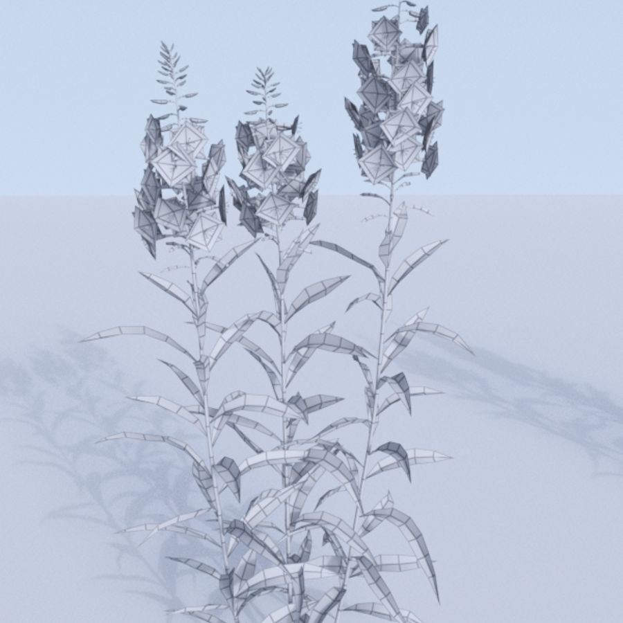 Fireweed set. Chamaenerion angustifolium royalty-free 3d model - Preview no. 9