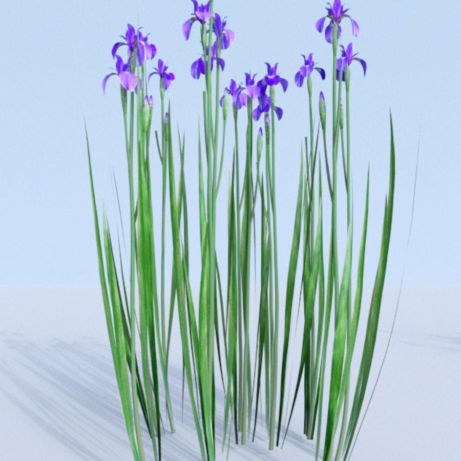 Siberian iris set - Iris sibirica royalty-free 3d model - Preview no. 18