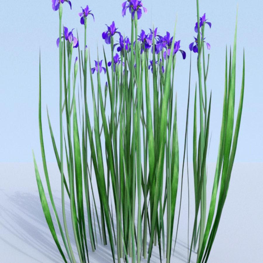 Siberian iris set - Iris sibirica royalty-free 3d model - Preview no. 2