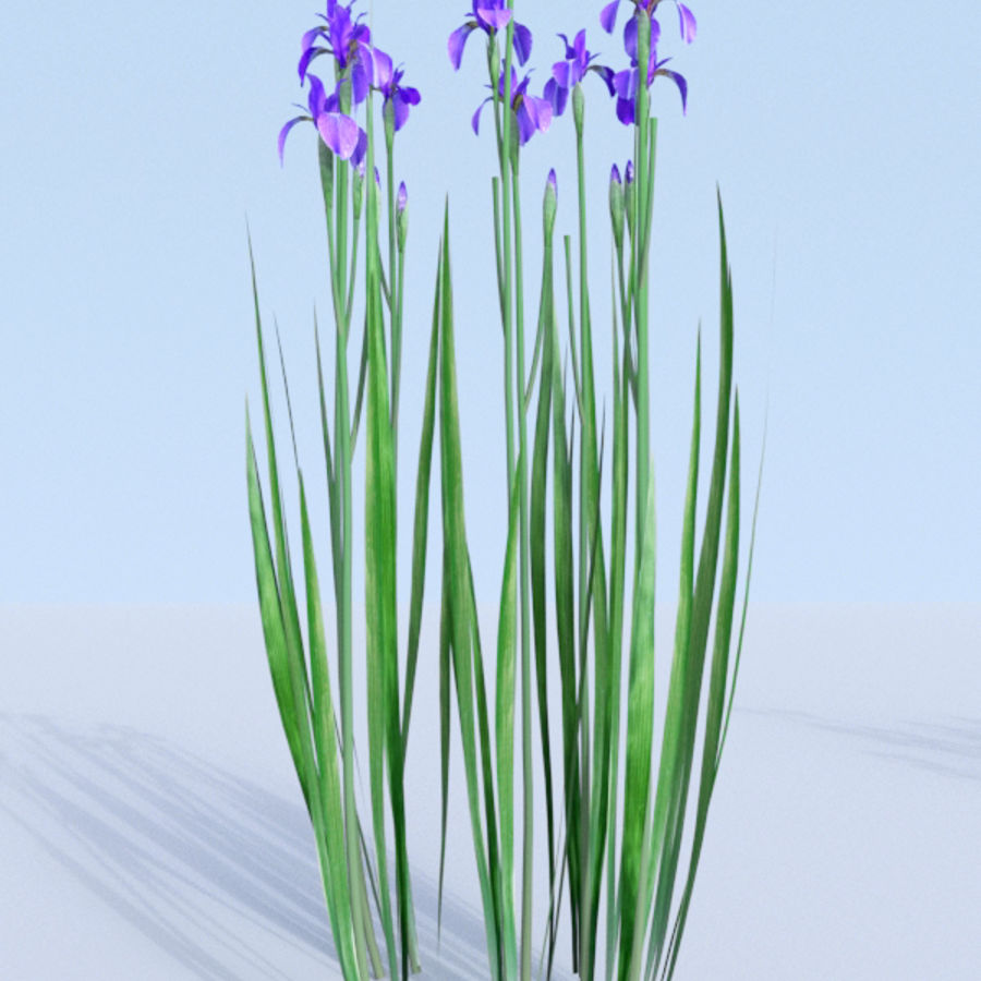 Siberian iris set - Iris sibirica royalty-free 3d model - Preview no. 16