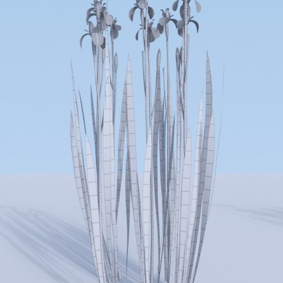 Siberian iris set - Iris sibirica royalty-free 3d model - Preview no. 17