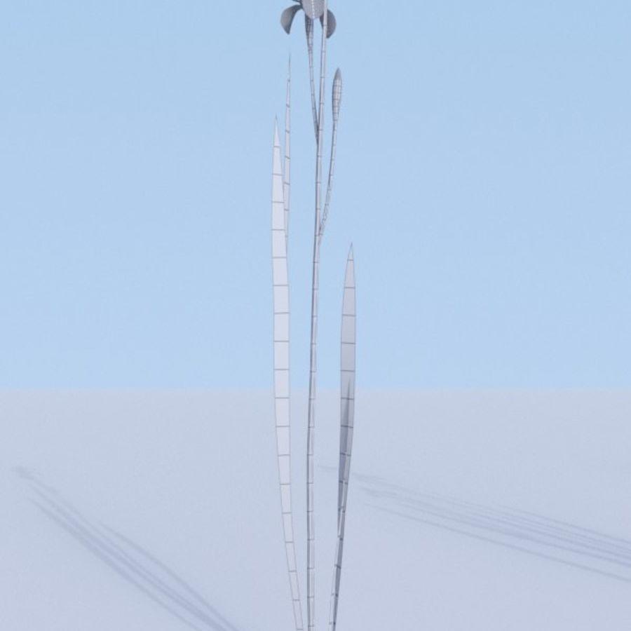 Siberian iris set - Iris sibirica royalty-free 3d model - Preview no. 5