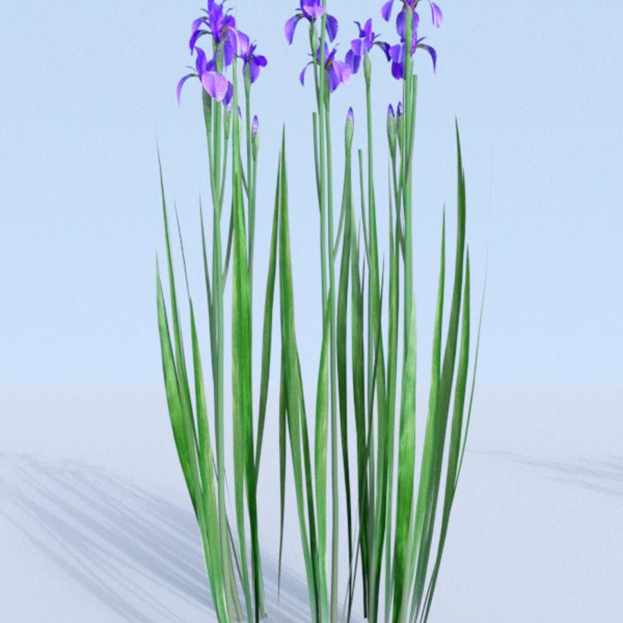 Siberian iris set - Iris sibirica royalty-free 3d model - Preview no. 16