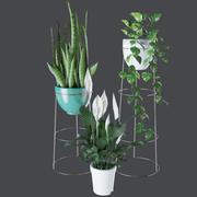 Коллекция комнатных комнатных растений Evergreen 3d model