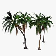 Coconut Palm 3d model