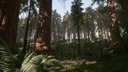 Redwood Forest for Game Ready 3d model